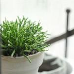 如何添置办公室里的绿色植物?